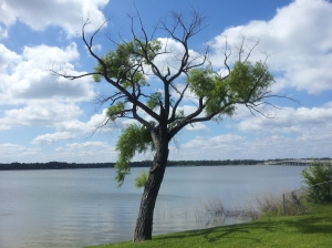 "Copyright 2014 by John J. Rigo ""The Tree is Me"" taken on the morning of June 10th, 2014 at Northwood Shores on Cedar Creek Lake in East Texas."
